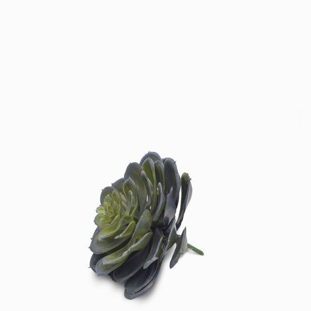 Suculenta alcachofa