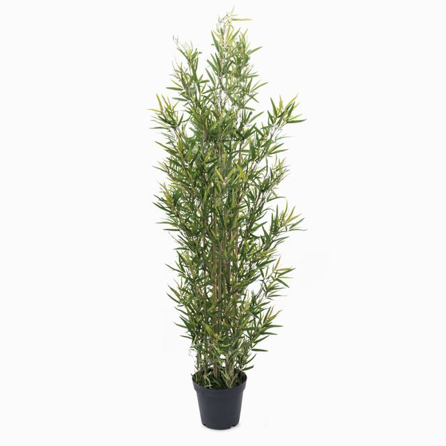 Planta bambù