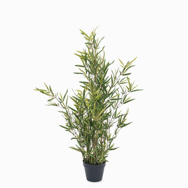 Planta mini bambù