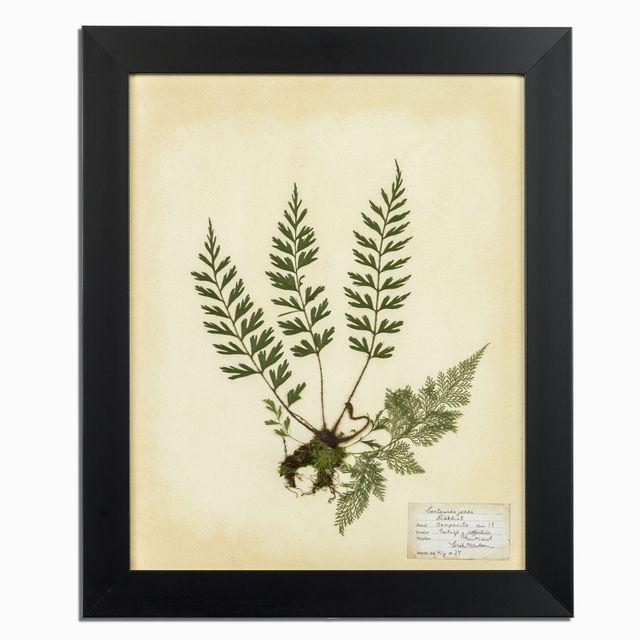 Herbario blanco 35x50