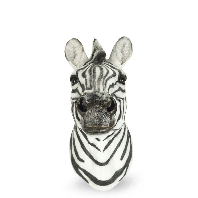 Zebra real