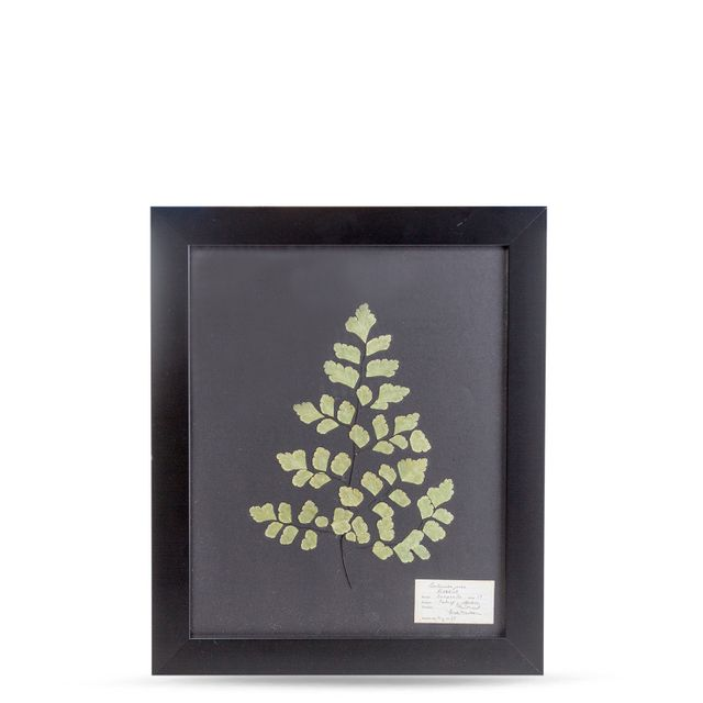 Herbario negro 35x50