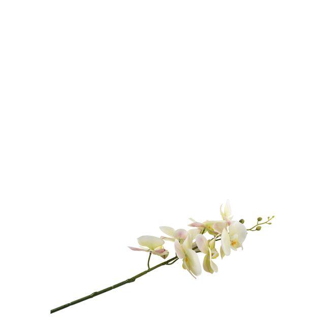 Orquidea-verde