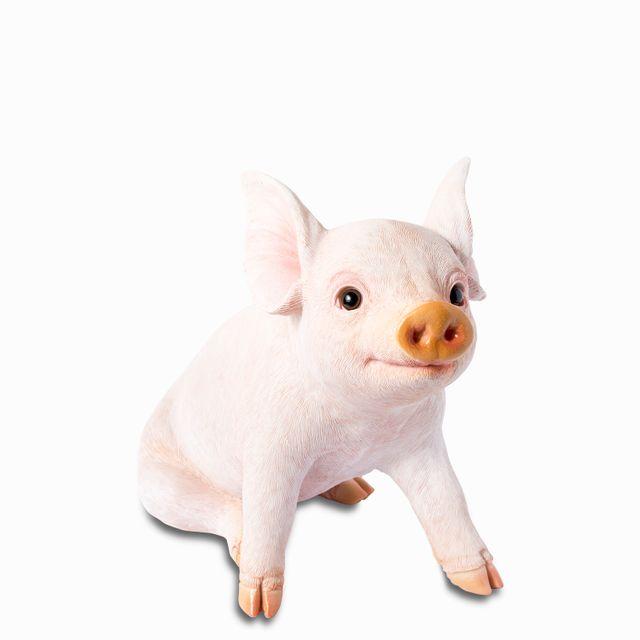 Mini pig sentado