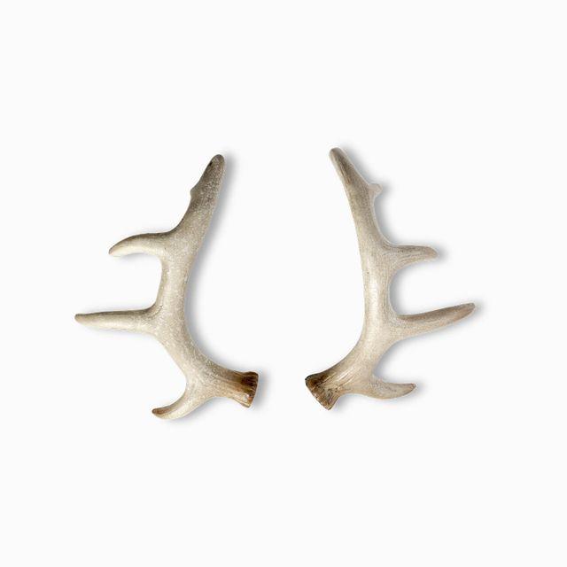 Set de cuernos reno