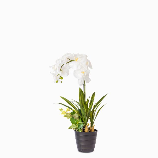 Orquidea en maceta 80 cm