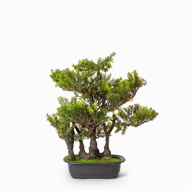 Bonsai verde 45 cm