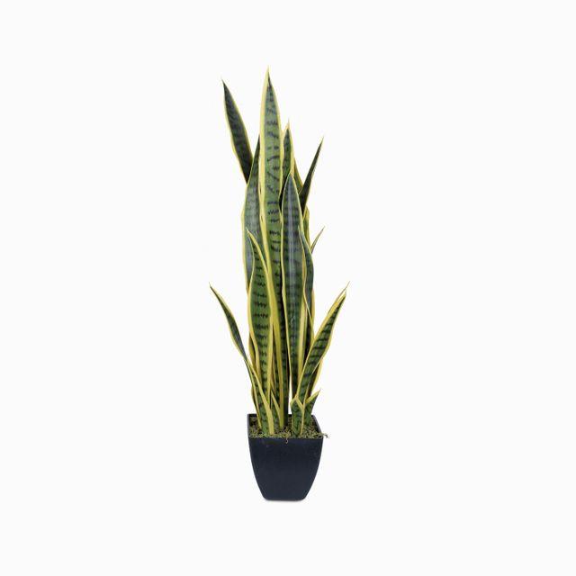 Planta serpiente 89 cm