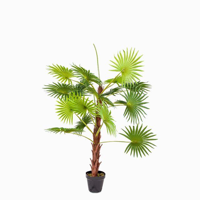 Mini palmera ventilador 120 cm