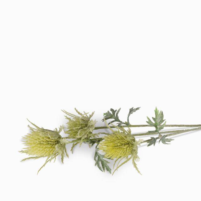 Flor pulsatilla