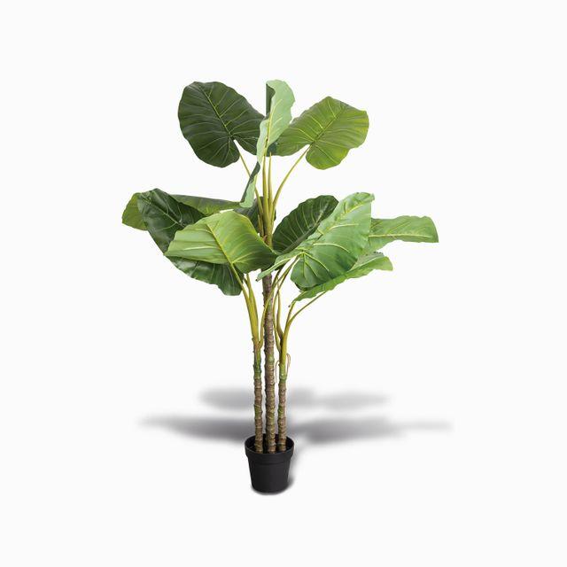 Planta philo 155cm