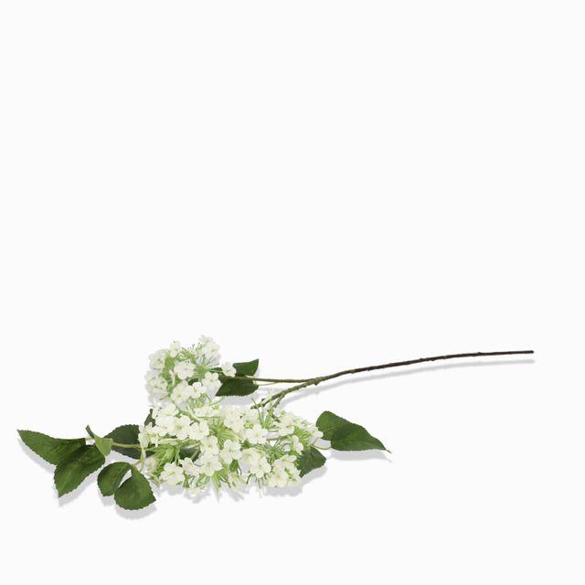 Racimo-hortensia-blanca