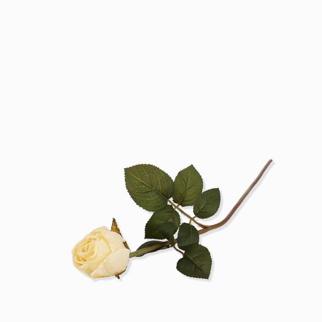 Rosa-crema-50cm