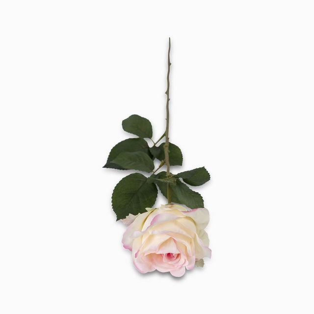 Rosa-bordes-rosados-64cm