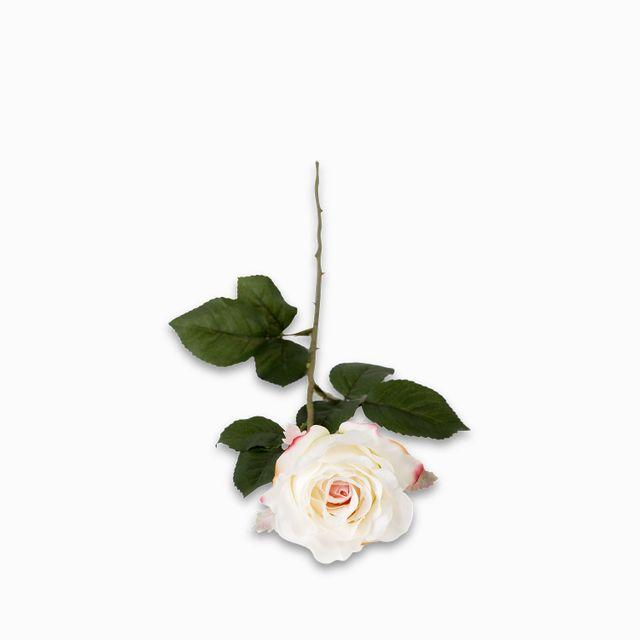 Rosa-pastel-64cm