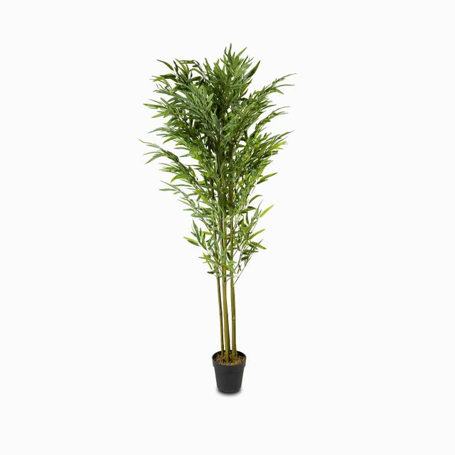 Planta-bambu-180cm