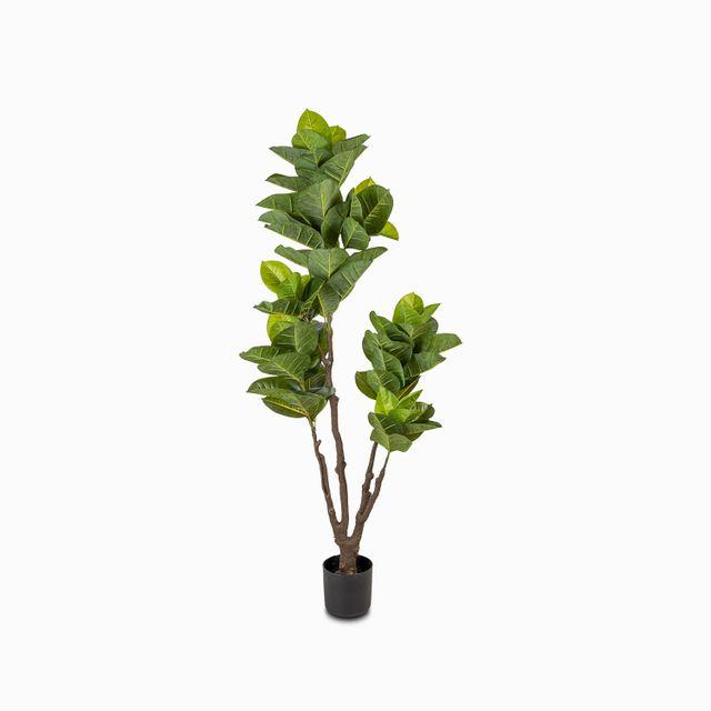 Arbol-de-caucho-160cm